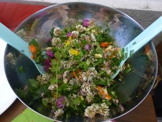 Kleeblüten und mehr: Sommerlicher Wildkräuter-Salat