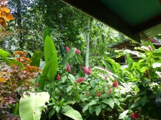 Blühend-bunte Dschungelvielfalt...