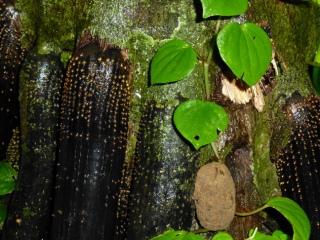 … und skurril wirkende Baum-trifft-Wurzel- Details bei der Dschungel-Exkursion.